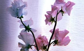 憧れの花のある生活