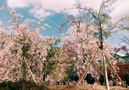 京都へ行きました!