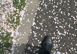 春といえば!